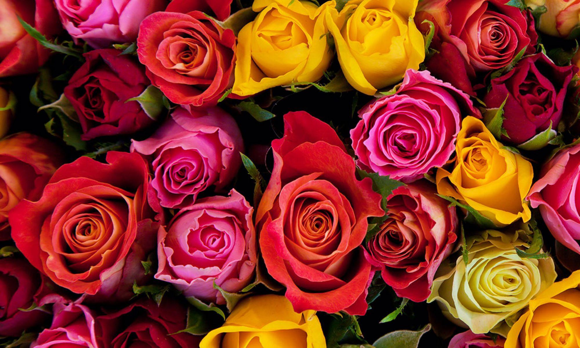 rozi.bg